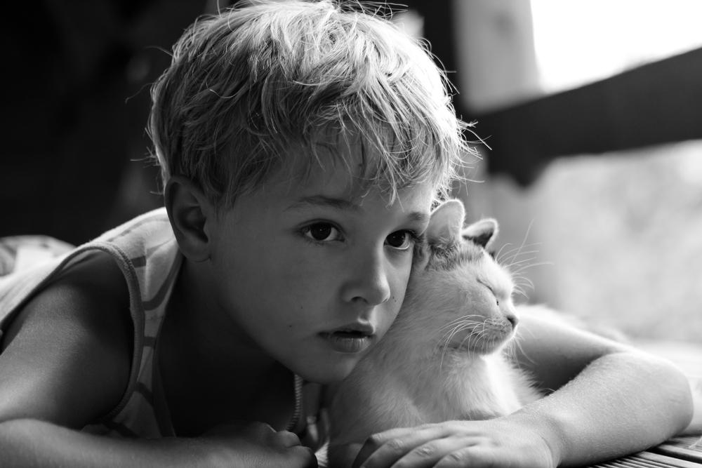 猫がどうしても好きになれず猫を軽視しイジメてしまう大人の気づき!