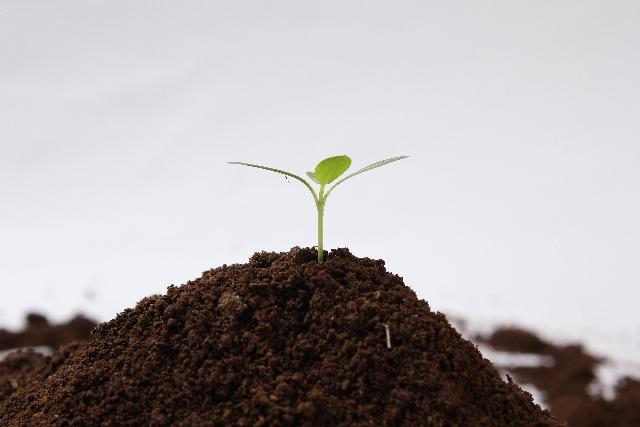 日々自分で植えた種が芽を出す。そして成果物を収穫する時が来る!自分に起こることは良いことも悪いことも自分が種を蒔いた結果です!