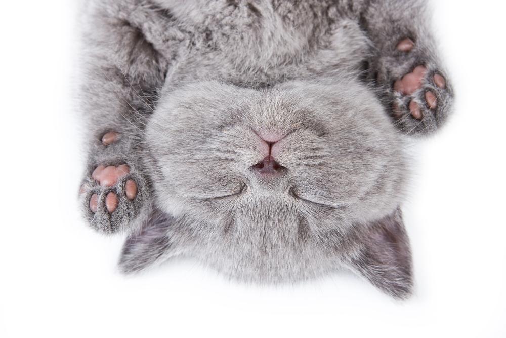 猫1匹殺した者は最低でも懲役10年にするべきです。動物を殺す者の中には自然死を装い子供を支配する道具にする場合も。