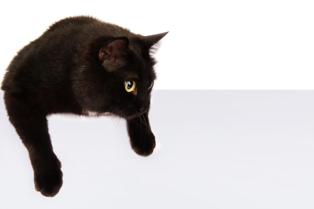 黒猫が不吉だなんてとんでもない!見えない支配的な悪い暗示を解きたい場合は黒猫を大事にすると良い!