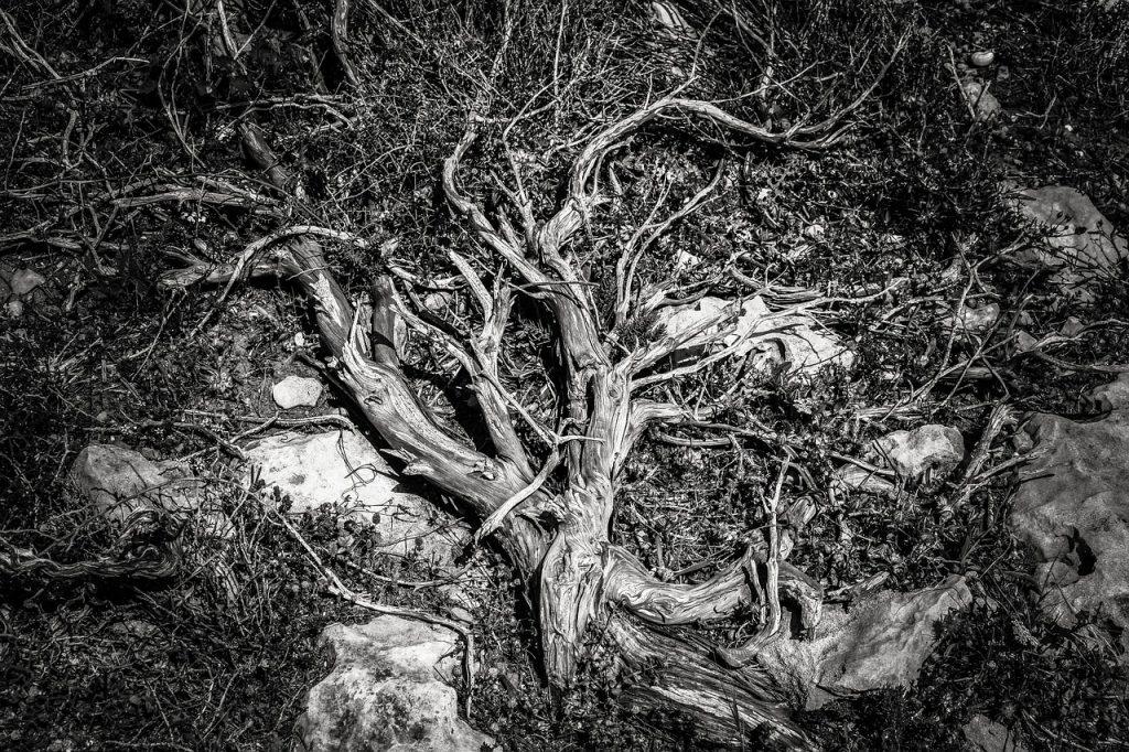 根が腐ってる人間…。根が腐っていたら個性なんか開花しない!つまり、本当の自分なんて生きられないってこと!