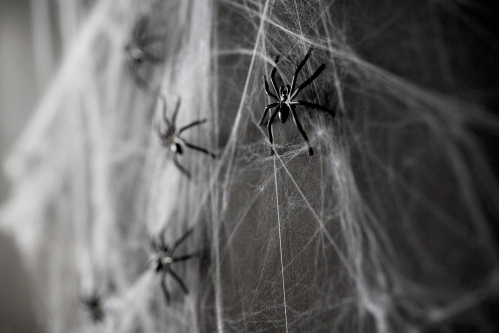 どうしてもDVをやめられない男性は「タガメ女」と「女郎蜘蛛」タイプについてよく勉強することが必要です。