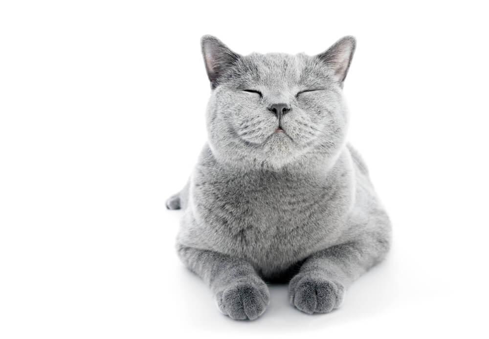 「本当の自分」を生きるために、ネコを見習うと良い☆