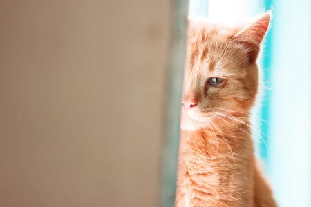 保健所で殺処分されるはずだった黒猫を飼って9年…、トラウマが癒えてきた理由の1つは、飼い猫の「真っすぐさ(純粋さ)」です。
