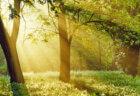 人は、王道に気づくまで迷いの森を彷徨う! 心が苦しい人は変わらないことが癖になっている人が多いので、1日1つでも自分の内側を変えよう!